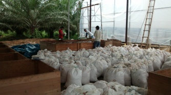 Receipt of wet cacao at the plant